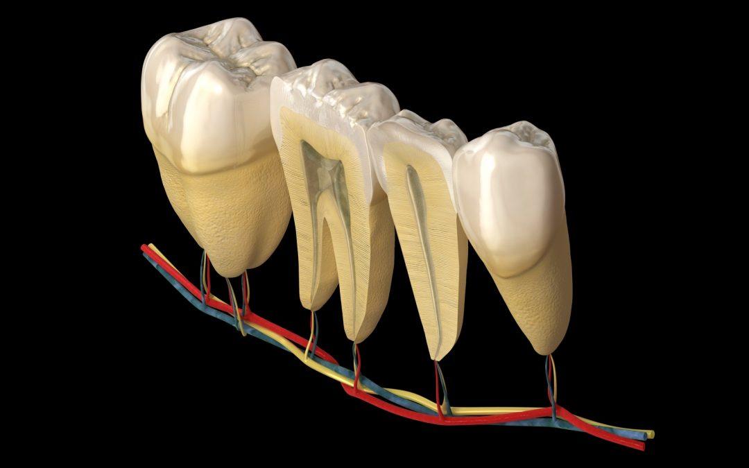 Excelência em Escultura Odontológica